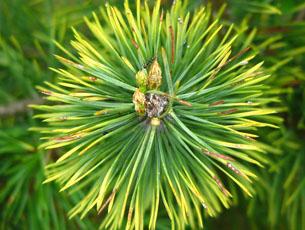 Immergrüne Laub- und Nadelhölzer