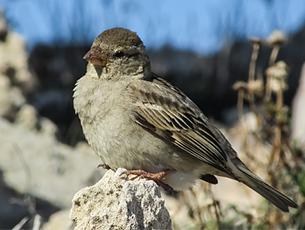 Vogeluhr