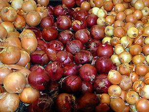 Die Zwiebeln